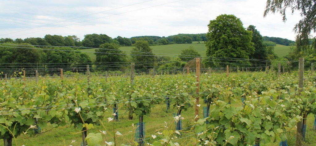 High Clandon Vineyard and surrey hills