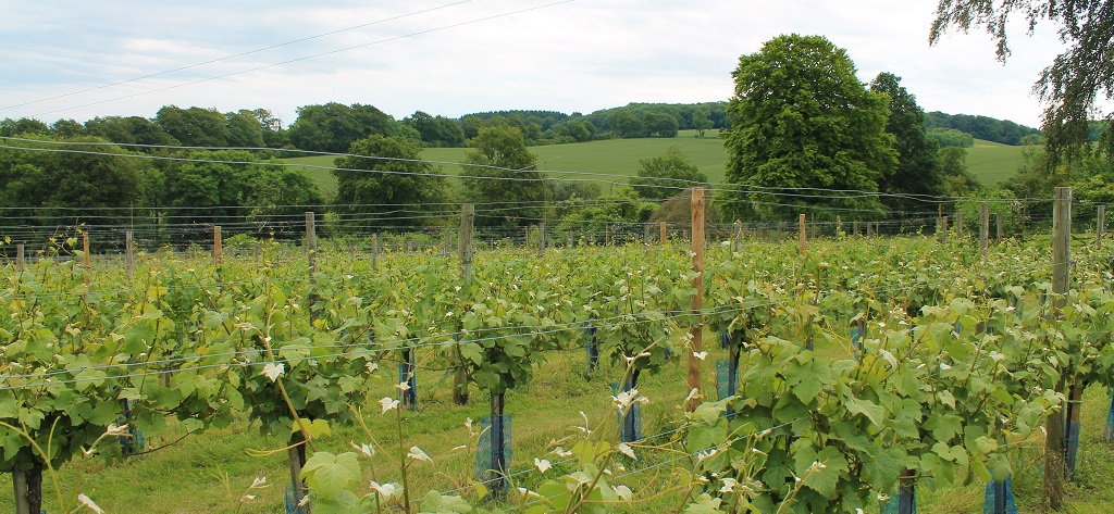 High Clandon Vineyard