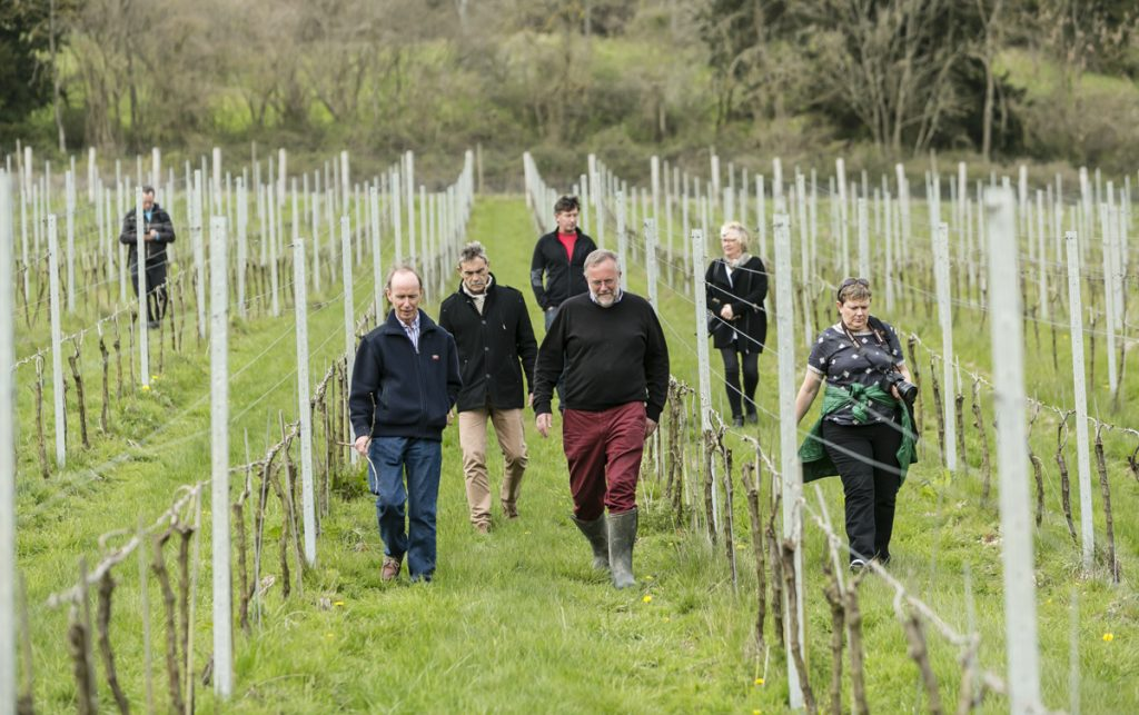 Enjoy vineyard tours